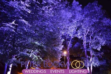 blue garden tree lighting